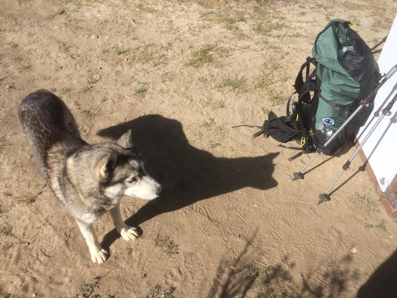 Husky we met at the water cache