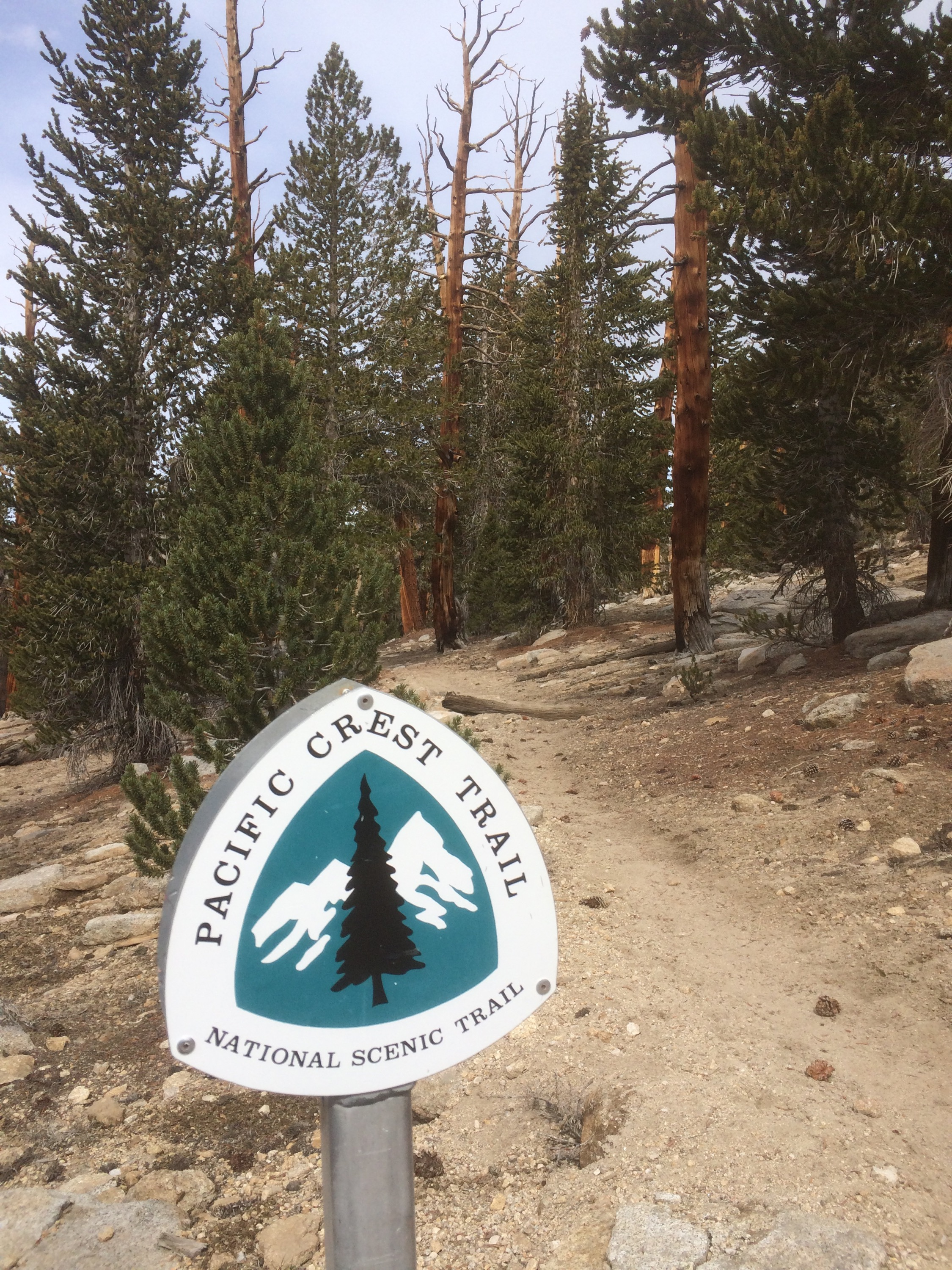 PCT sign on the trail.