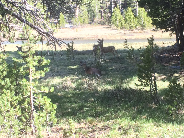 Deer in McClure Meadow