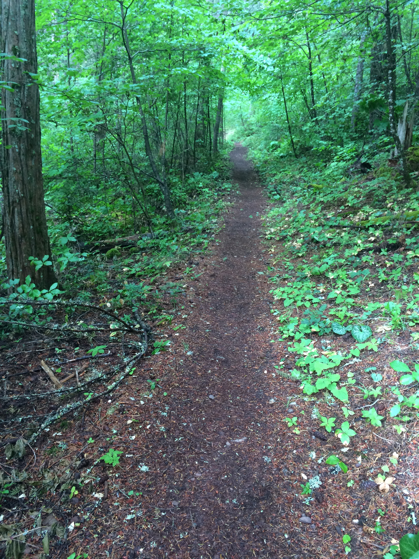 Lush, greenery around the trail near McCloud River