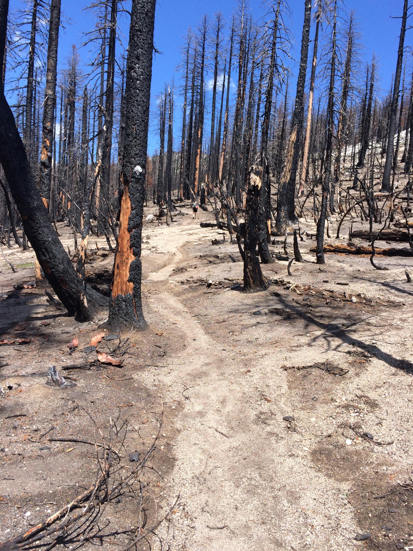Burn area near Etna