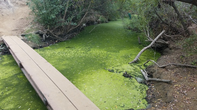 Algae filled Rose Creek with a board bridge served as our turn around point.